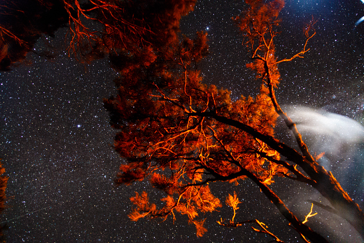 Majestic orange trees against bright star sky with light brush